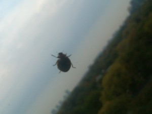 Lady bug on window